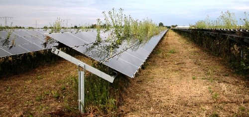 Knut Loeschke, June 2011, Sonnen Energie Feld