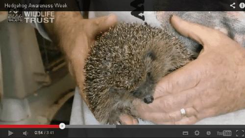 Sussex Wildlife Trust visits Roger's Hedgehog Rescue