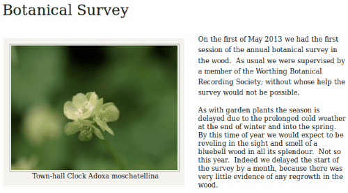 Tottington Wood botanical survey