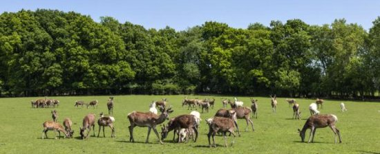 Deer at Woodmancote Place