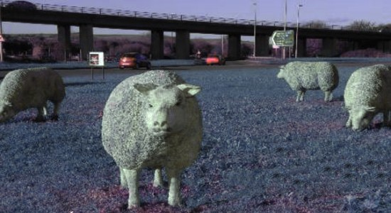 Police save family from sheep at A27 Shoreham flyover