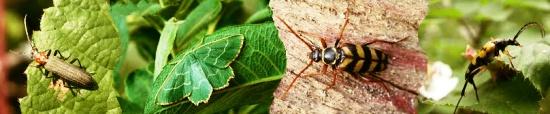 Habitat management for invertebrates at Woods Mill