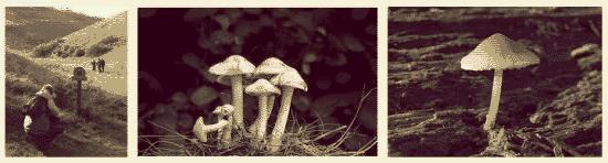 The Devil's Dyke fungi hunt - part 1