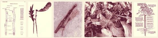 Identification of trees in winter
