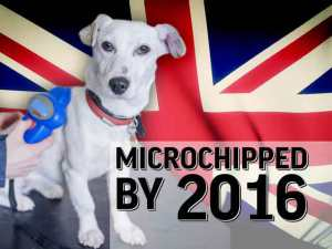 microchipped-dog