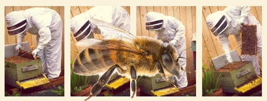 Amanda Millar An Introduction to Bees and Beekeeping