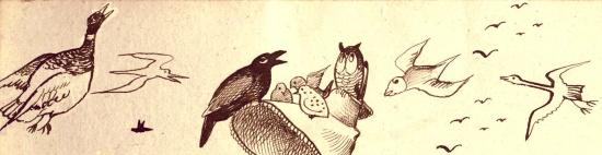 Edward Lear birds