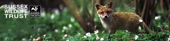 Sussex Wildlife Trust at Woods Mill