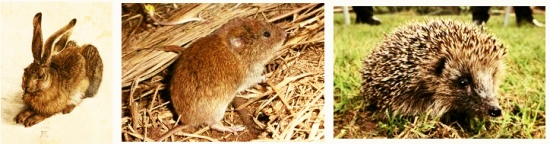 Small but Perfectly Formed An Introduction to the Small Mammals of Sussex