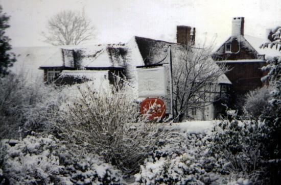 Arbor Vitae in the winter of 1991 by Stuart Howgrave-Graham