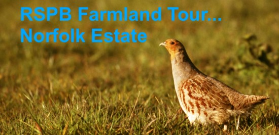 RSPB Norfolk Estate partridge