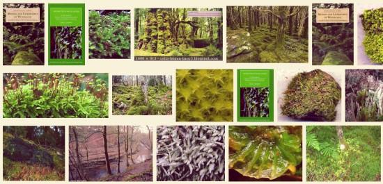 Woodland mosses and liverworts