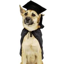 academic_dog