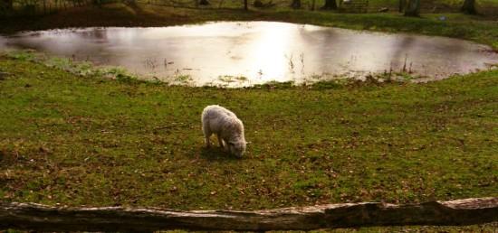 Dew pond at Saddlescombe Farm