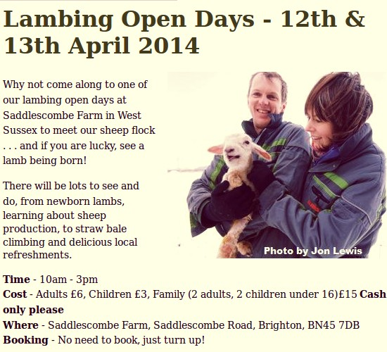 Lambing Open Days at Saddlescombe Farm
