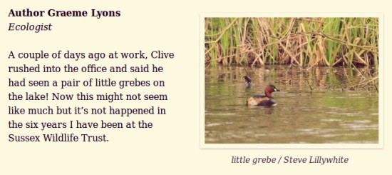 Little Grebe at Woods Mill