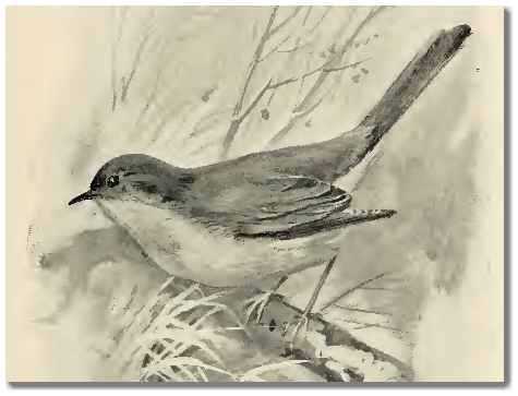 A nightingale sang in Mayfield Square