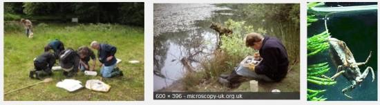 Finding, Identify & Surveying Invertebrates