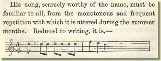Edward Lear enthusing about the song of the Yellowhammer
