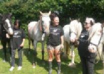 Horn Lane horses