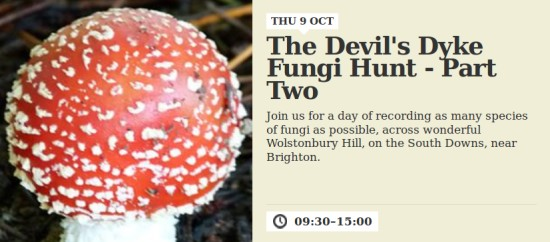 Wolstonbury Hill fungi hunt