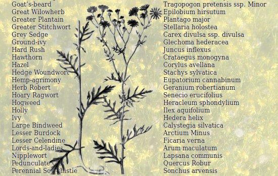Satisfy your inner botanist at Tottington Wood