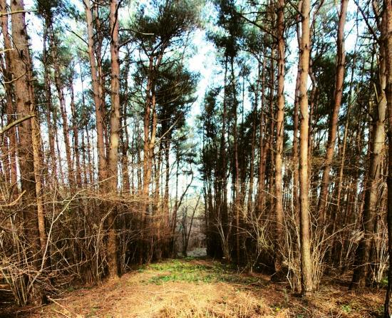 Pondtail Wood