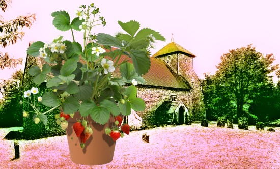 Pyecombe Church Plant Sale