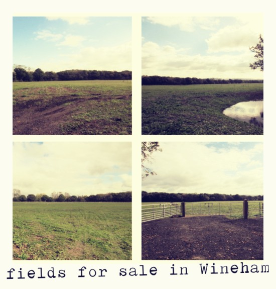 Fields for sale in Wineham