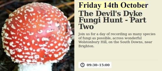 Wolstonbury Hill fungi hunt