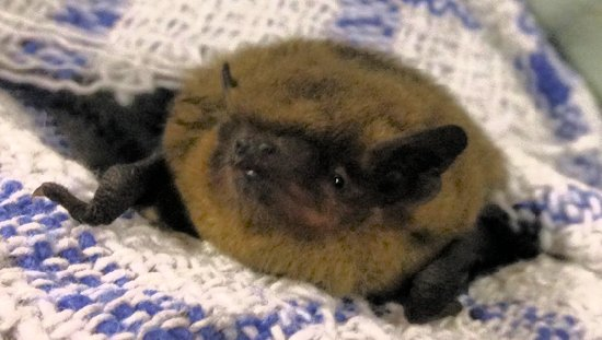 Woods Mill bat rescue
