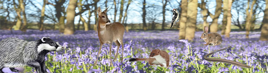 Collage of animals over bluebell wood