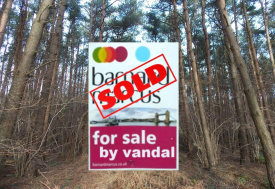Pondtail Wood sold by vandal