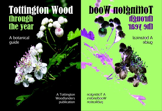 Tottington Wood botanical guide