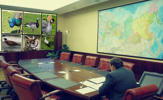 Badly doctored image of zoom meeting with exotic birds in stead of people