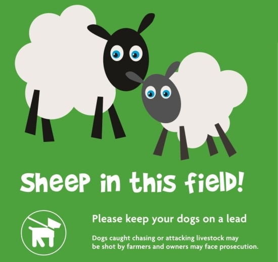 Sheep in this field